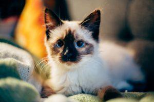 Comment aménager son logement pour accueillir un chaton ?